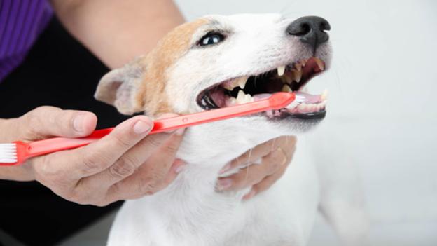 dog dental hygiene tips from cross timbers animal medical center in flower mound tx